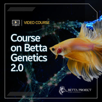 Course on Betta Genetics 2.0 - Betta Project: A DNA Experience